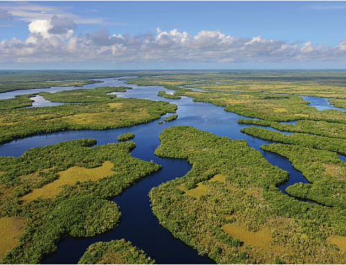 Everglades Restoration – Get Educated, Informed and Take Action!